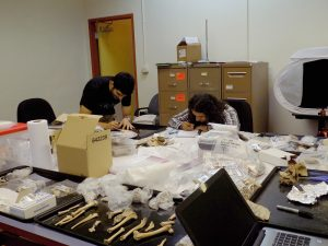 CTPA Zooarch Lab
