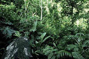 ForestSpeaks_Img